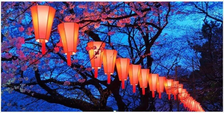 What is the meaning of cherry blossoms